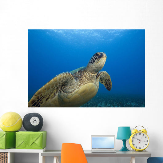 Hawaii, Close-Up Of Green Sea Turtle Swimming Forward Wall Mural