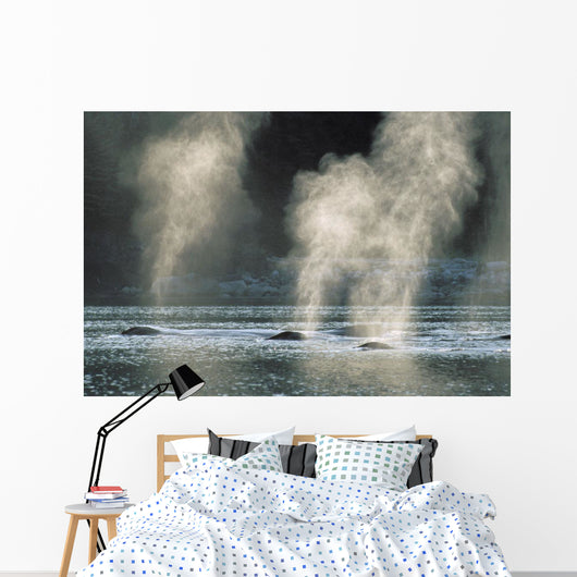 Group Of Humpback Whales Surfacing Wall Mural