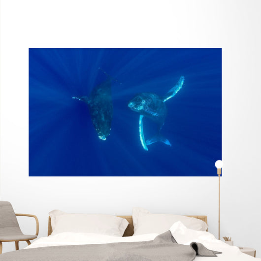 Hawaii, Two Humpback Whales Swimming In Deep Blue Ocean Wall Mural