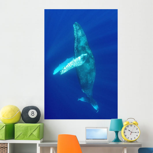 Hawaii, Humpback Whale Swimming In Deep Blue Ocean Wall Mural