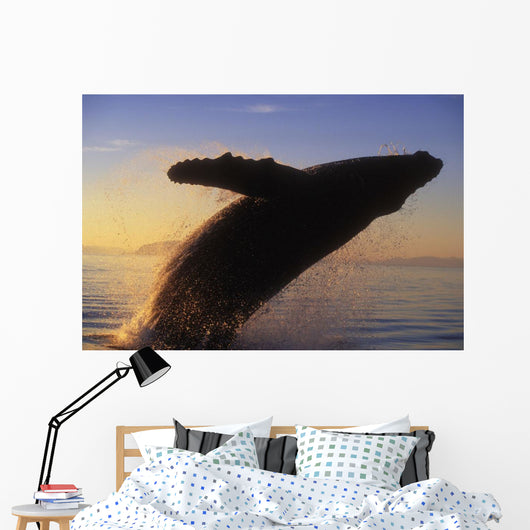 Alaska, Panhandle, Inside Passage, Humpback Whale Breaching At Sunset Wall Mural