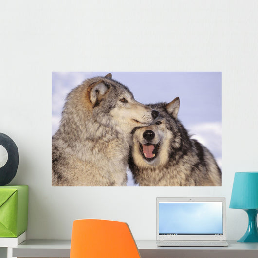 Alaska, Two Gray Wolves At The Forests Edge Wall Mural