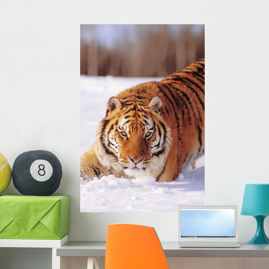 Alaska, Siberian Tiger Stalking Prey In Deep Winter Snow Wall Mural