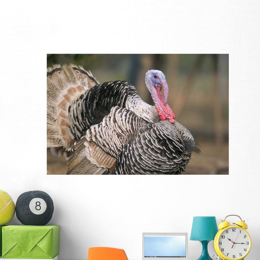 Thailand, Nong Bua Lumphu, Male Turkey With Plumage On Farm Wall Mural