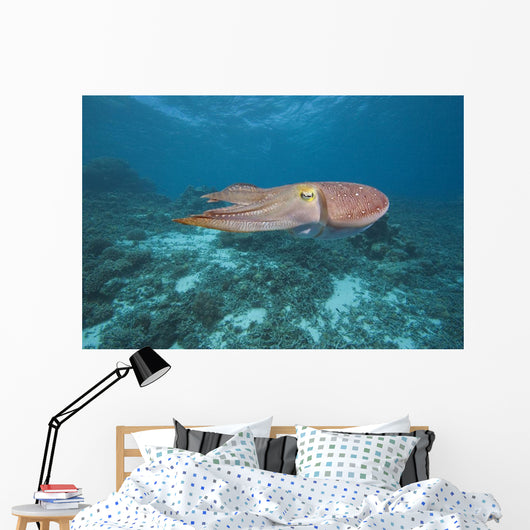 Micronesia, Palua, Common Cuttlefish, Near The Ocean Floor Wall Mural