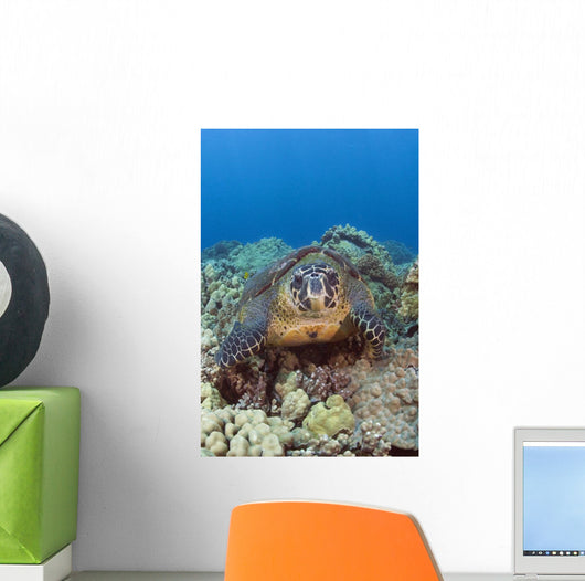 Hawaii, Big Island, Hawksbill Turtle Sitting On The Coral Wall Mural