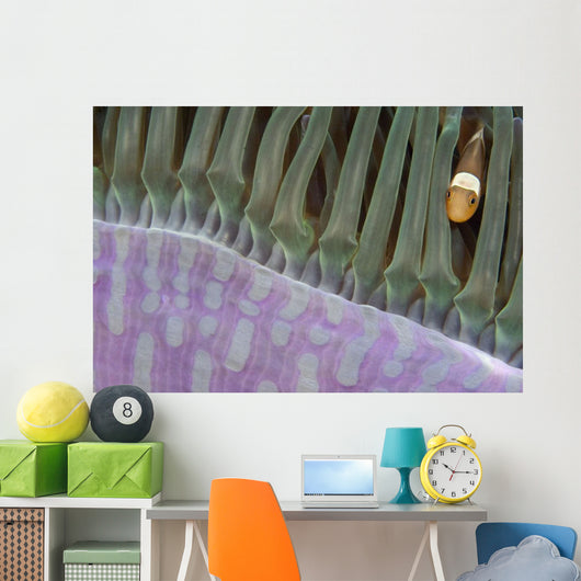 Indonesia, Clown Anemonefish In Anenome Wall Mural