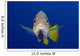 Hawaii, Maui, Bluestripe Snapper Wall Mural