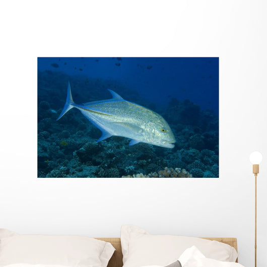 Hawaii, Bluefin Trevally Or Jack Wall Mural