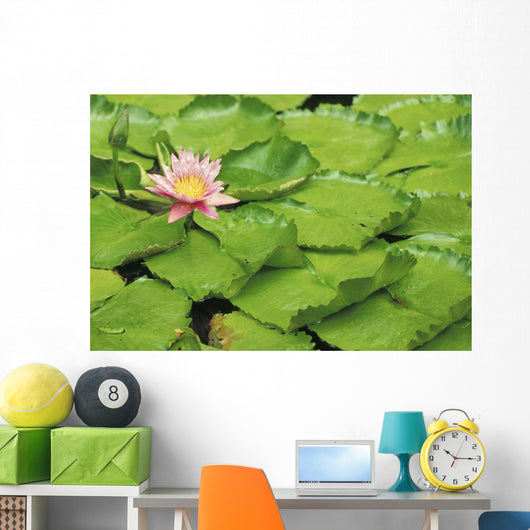 Water Lily And Lily Pads Wall Mural