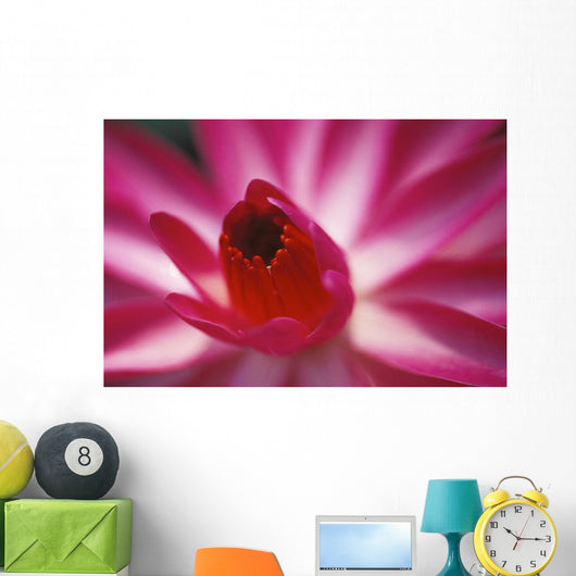 Pink Water Lily, Close-Up Detail Wall Mural
