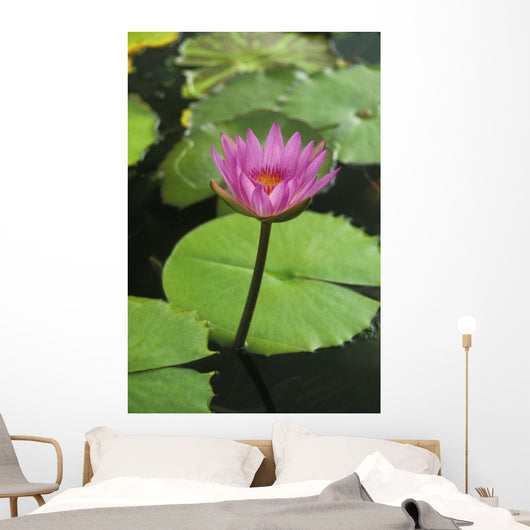 Water Lily, Single Purple Blossom Wall Mural