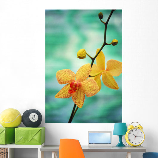 Hawaii, Yellow Dendrobium With Orange Speckles, Orchid Flower On Plant Wall Mural