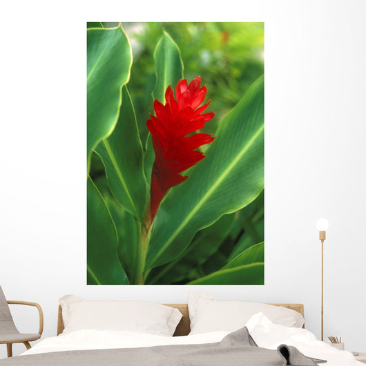 Hawaii, Red Torch Ginger Wall Mural