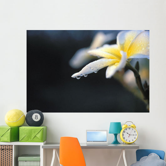 Hawaii, Plumeria White Wall Mural