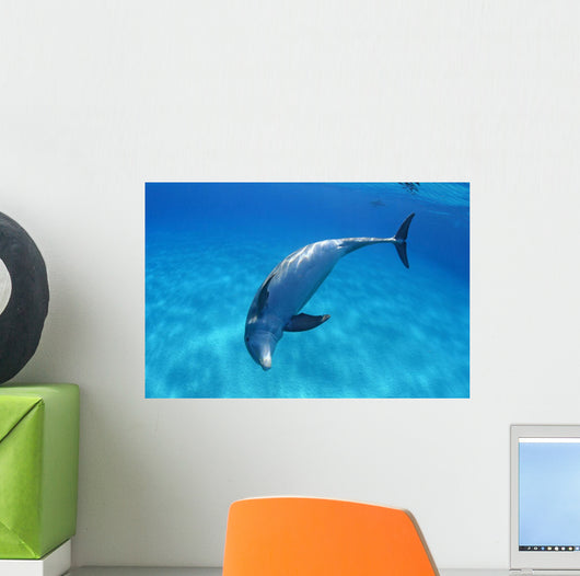Tursiops Truncatus Wall Mural