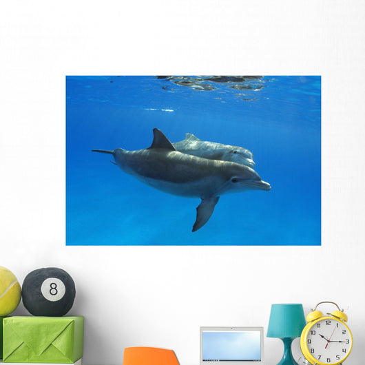 Two Atlantic Bottlenose Dolphin, Wall Mural