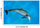 Atlantic Bottlenose Dolphin, Wall Mural