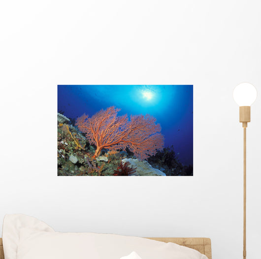 Papua New Guinea, Milne Bay, Orange Sea Fan With Sunburst Wall Mural
