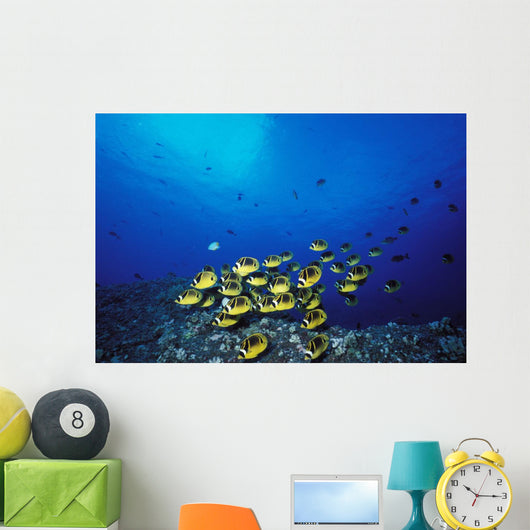 Schooling Raccoon Butterflyfish Near Reef Wall Mural