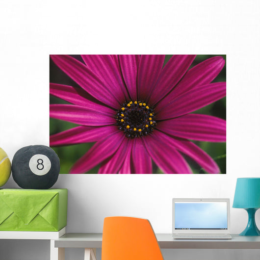 Close-Up Of Bright Purple Daisy With Yellow In Center Wall Mural