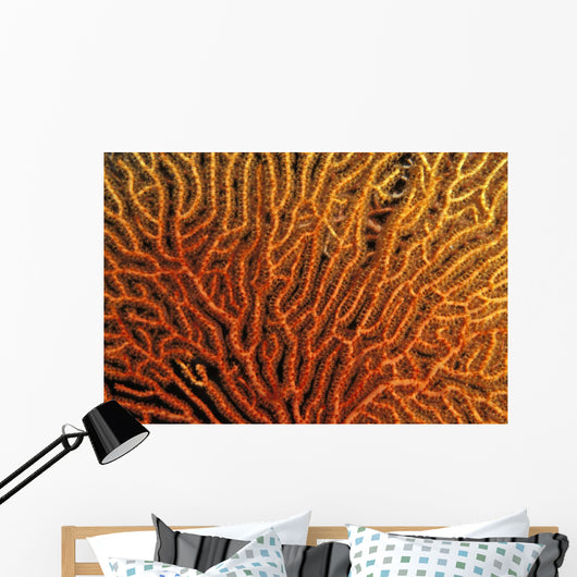 Australia, Coral Sea Fan, Close-Up Bright Orange And Yellow Branches Wall Mural