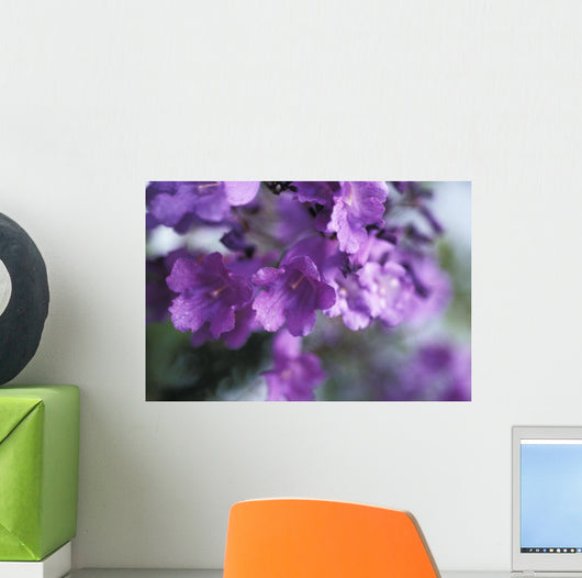 Jacaranda Fern Tree, Soft Focus, Purple Flowers Wall Mural