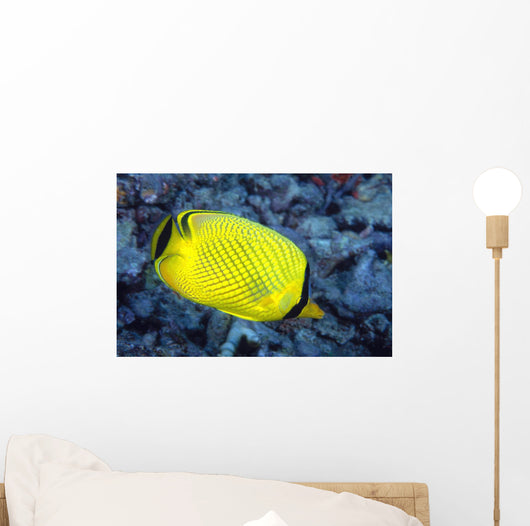 Indonesia, The Latticed Butterflyfish Wall Mural