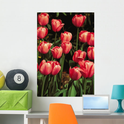 New York, Tulips Wall Mural