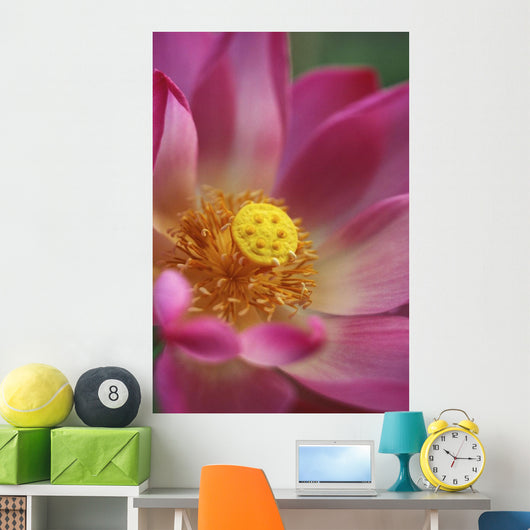 Extreme Close-Up Of Pink And White Lotus Blossom With Yellow Center Wall Mural