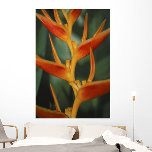 Red Orange Yellow Detail With Green Background Wall Mural