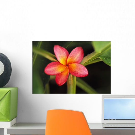 Pink Plumeria Flower Resting On Banana Plant Stems Wall Mural