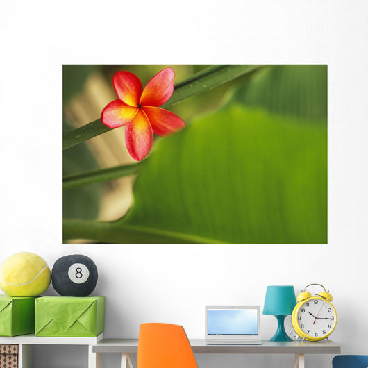 Pink Plumeria Flower Resting On Banana Plant Stem Leaves In Background Wall Mural