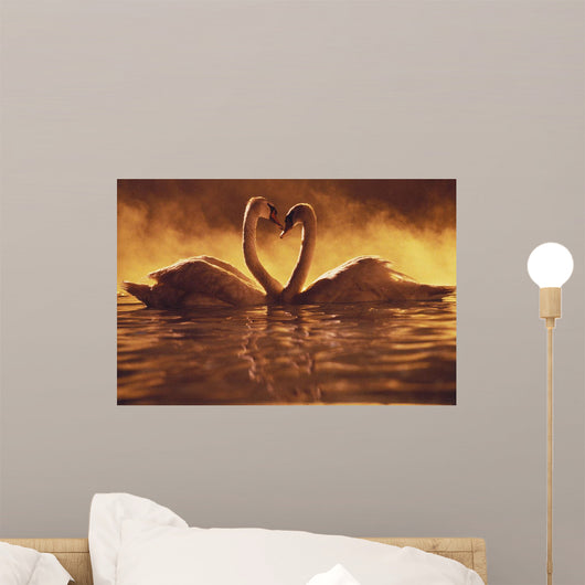 Pair Of African Swans Swimming Toward Each Other, Misty Romantic Wall Mural