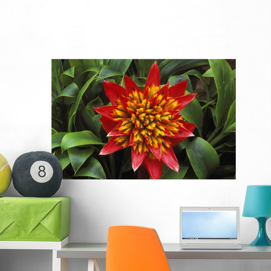 Close-Up Of A Single Red Bromeliad Blooming With Yellow Center Wall Mural