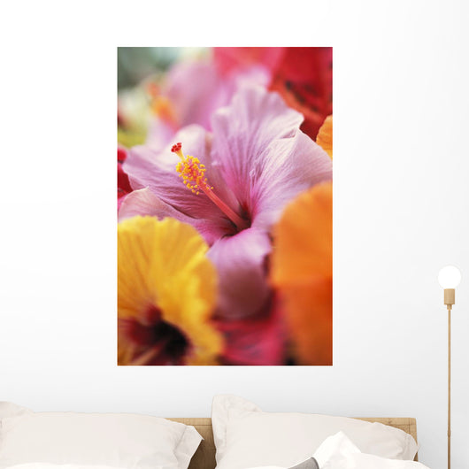 Hibiscus Flower Arrangement With Soft Focus Wall Mural