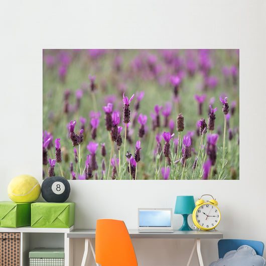 Field Of Purple Flowers Wall Mural