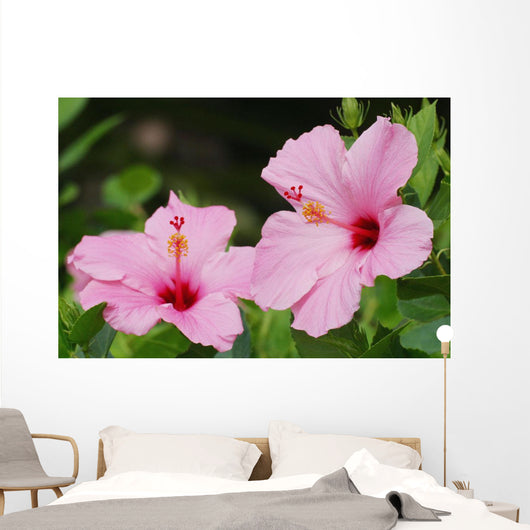 Close-Up Of A Pair Of Pink Hibiscus Wall Mural