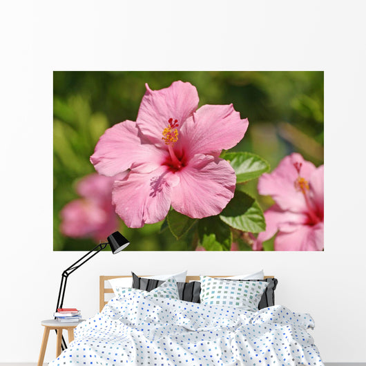 Close-Up Of A Pink Hibiscus Wall Mural