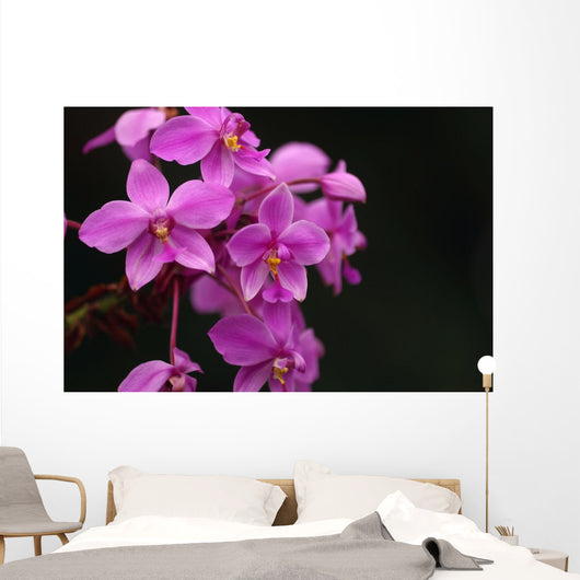 Close-Up Of A Cluster Of Bright Pink Orchids Wall Mural