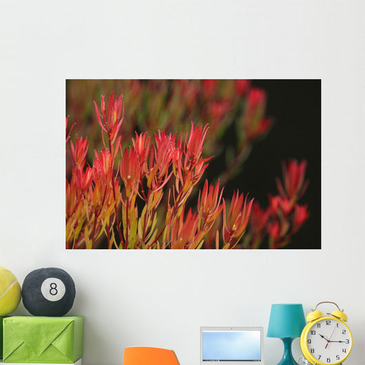 Bush Of Red And Yellow Leaves Wall Mural