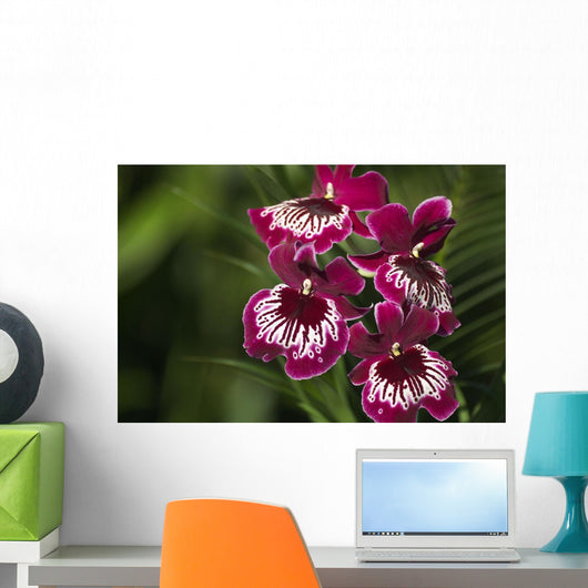 Close-Up Of Bright Purple And White Orchid Wall Mural