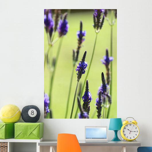 Close-Up Of Lavender Blossoms Wall Mural