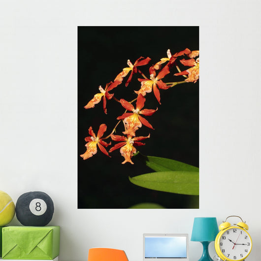 Close-Up Of Bright Orange Orchids Wall Mural