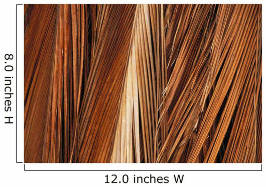 Close-Up Of Coconut Palm Fronds Wall Mural