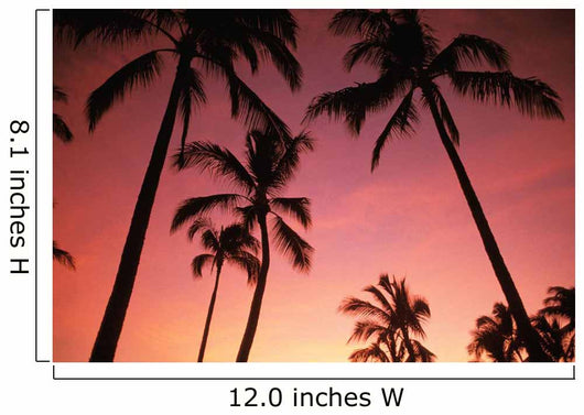 Hawaii, Silhouette Of Palm Trees At Sunset, Pink Sky Wall Mural