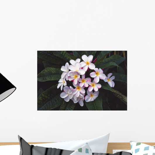 Hawaii, Cluster Of White Plumeria Flowers On Tree Wall Mural