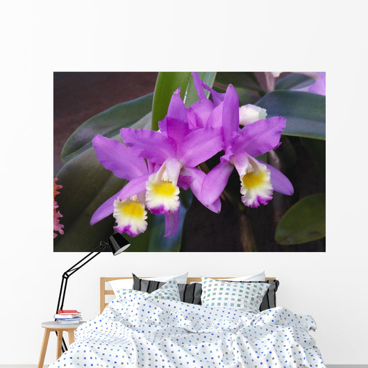 Hawaii, Cluster Of Pink Cattleya Orchids Wall Mural