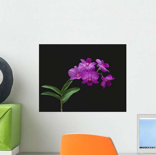 Purple Vanda Orchids On Plant, Closeup Studio Shot Wall Mural