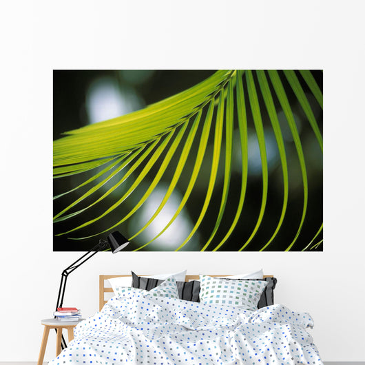 Close-Up View Of Palm Leaf, Hanging From Tree, Blurry Background Wall Mural